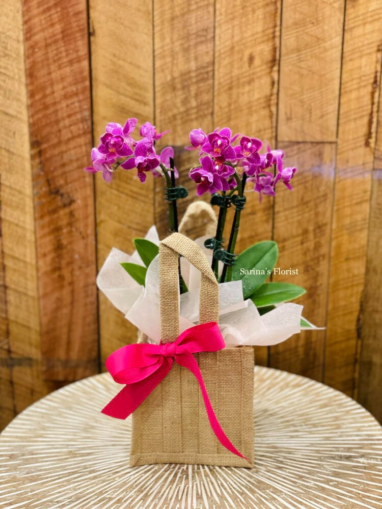 Orchid plant in hessian bag