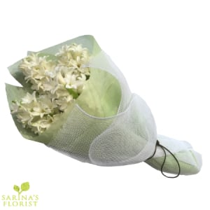 Wrapped Hyacinthus - White