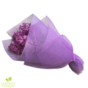 Wrapped Hyacinthus - Mauve